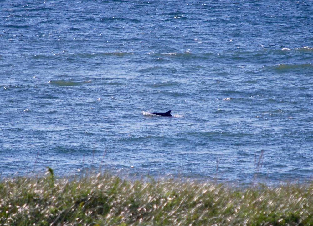 flipper fin & body